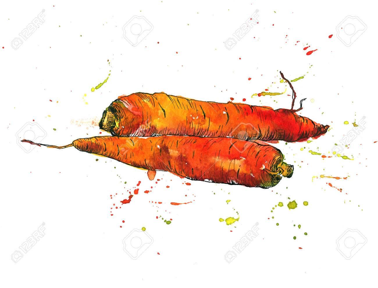 zanahorias dibujo de la tinta y de la acuarela con manchas de