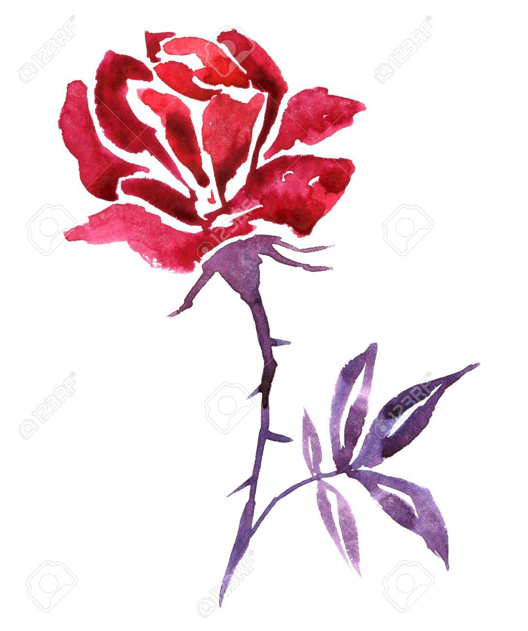 Aquarelle Rouge Fleur De Dessin Rose Rose Tire Par La Main Fond
