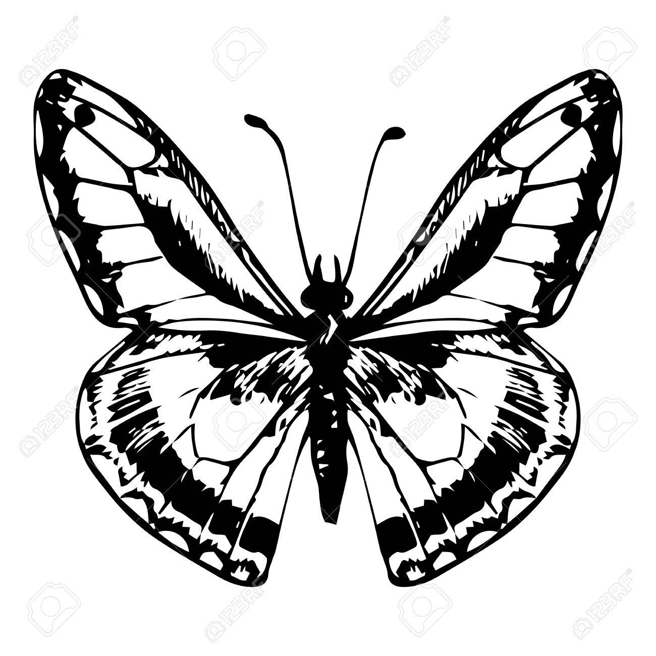 Hand drawn butterfly line drawing vector element stock vector 45503547