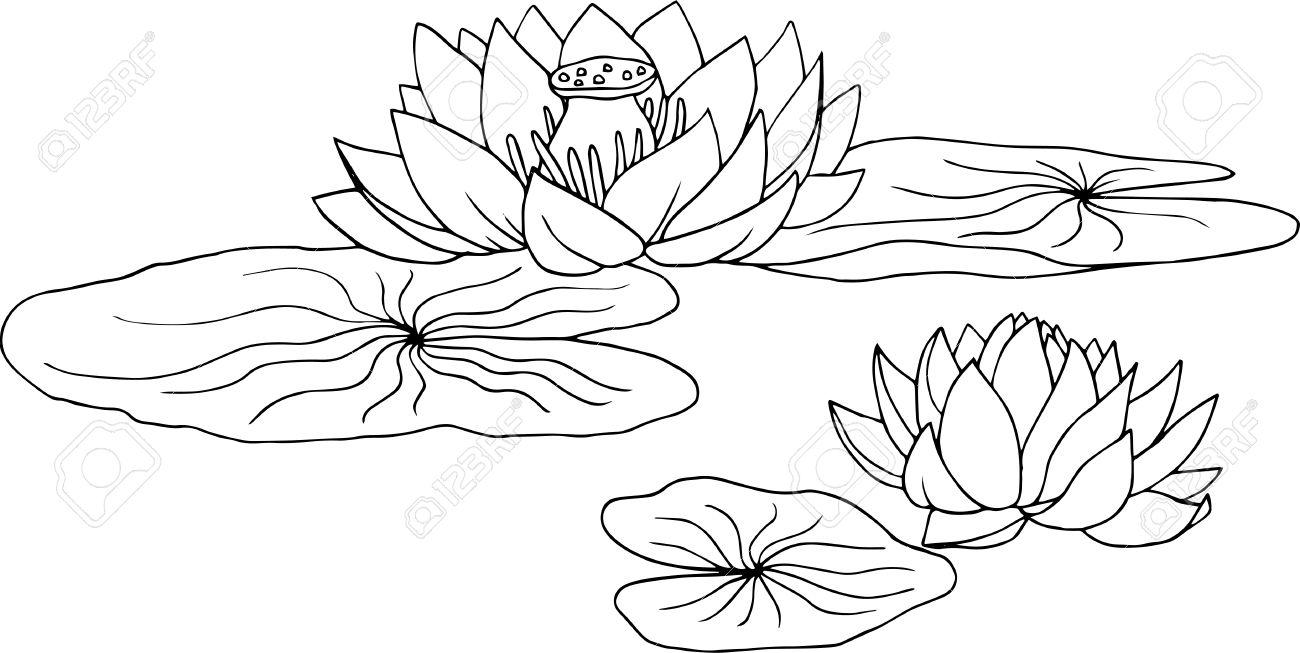蓮睡蓮の花と葉手描きの背景イラストのイラスト素材ベクタ Image
