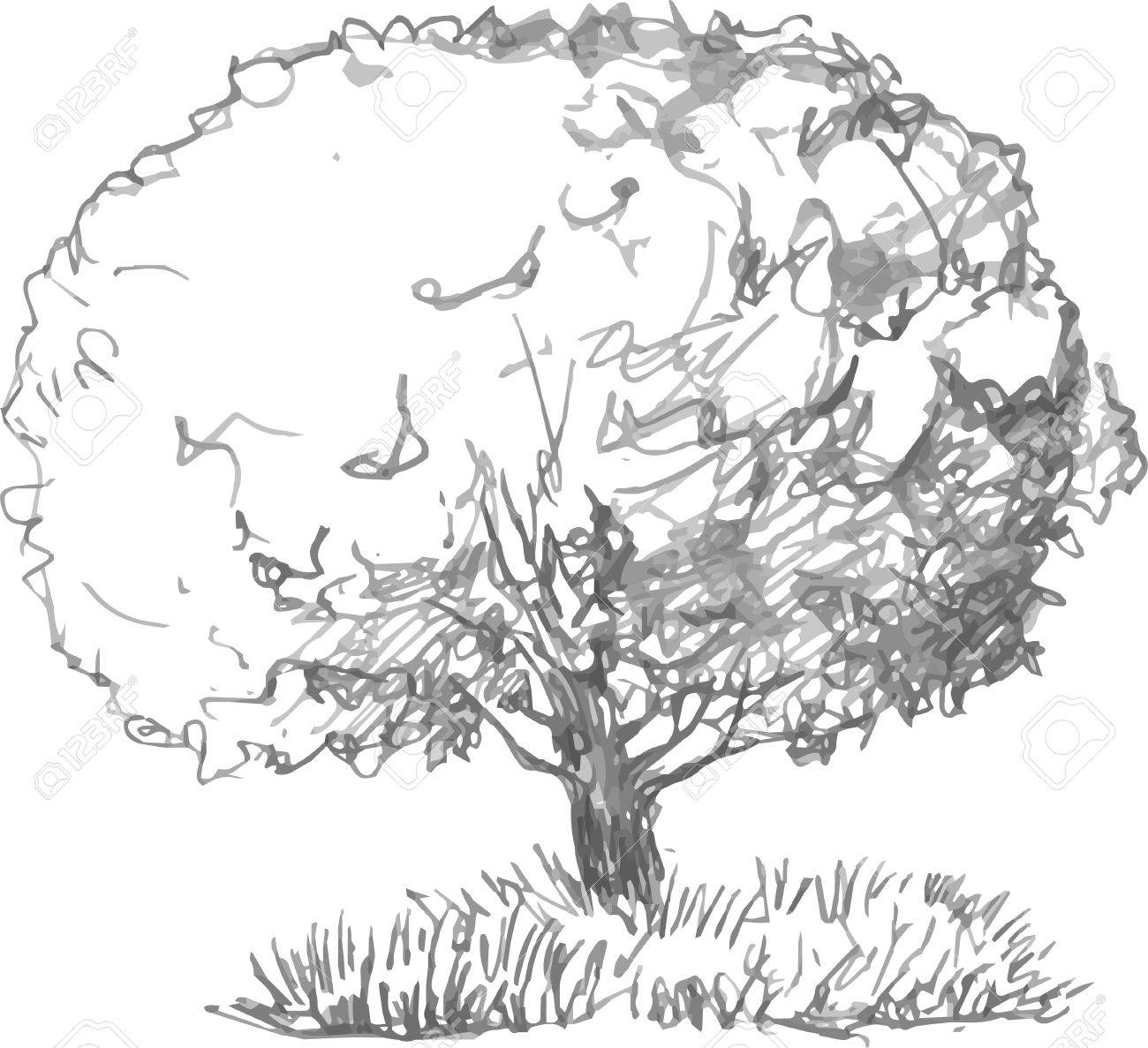 Deciduous tree with leaves and grass drawing by pencil sketch of wild nature forest