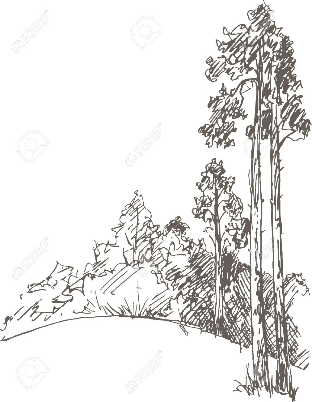 Pine trees and bushes drawing by pencil sketch of wild nature forest sketch
