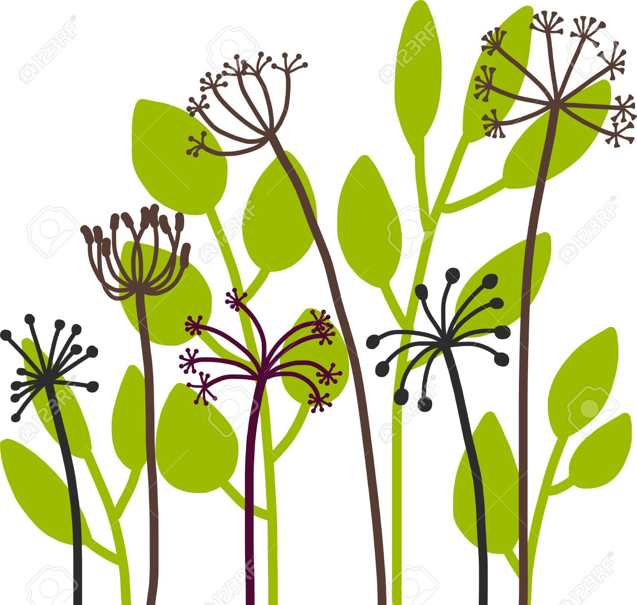 dill plants floral composition with wild plants drawing floral rh 123rf com vector planet vector plants illustrator