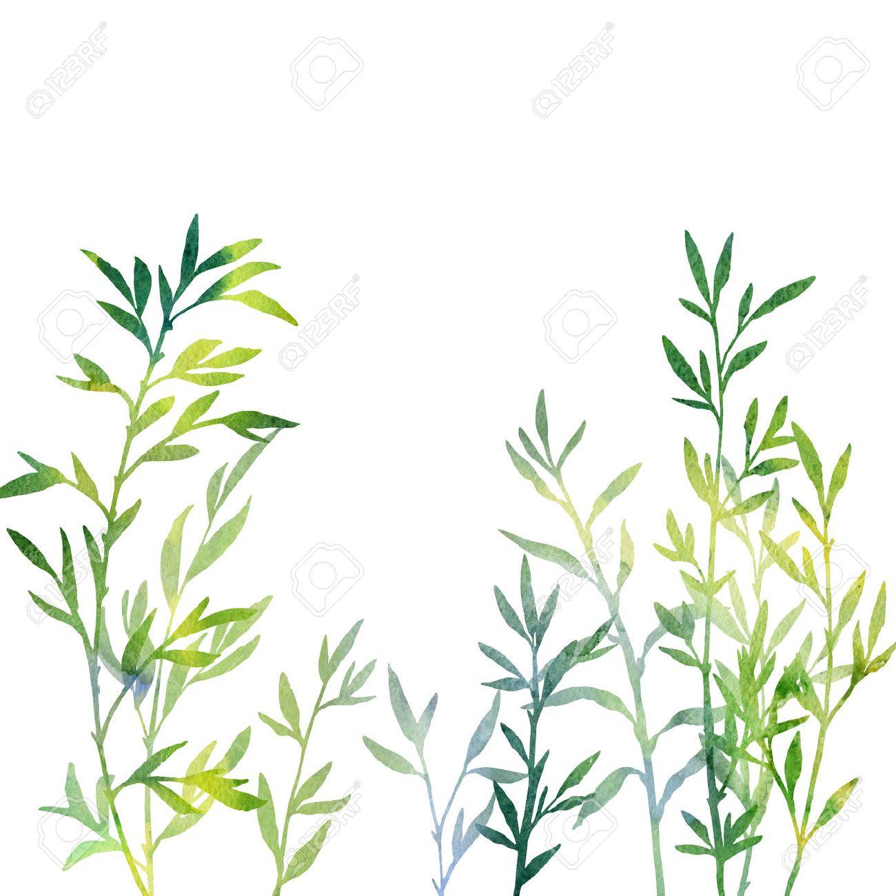 Fourré De Branches Avec Des Feuilles De Dessin à Laquarelle Les Pousses De Bambou Vert Tiré Par La Main Illustration Artistique