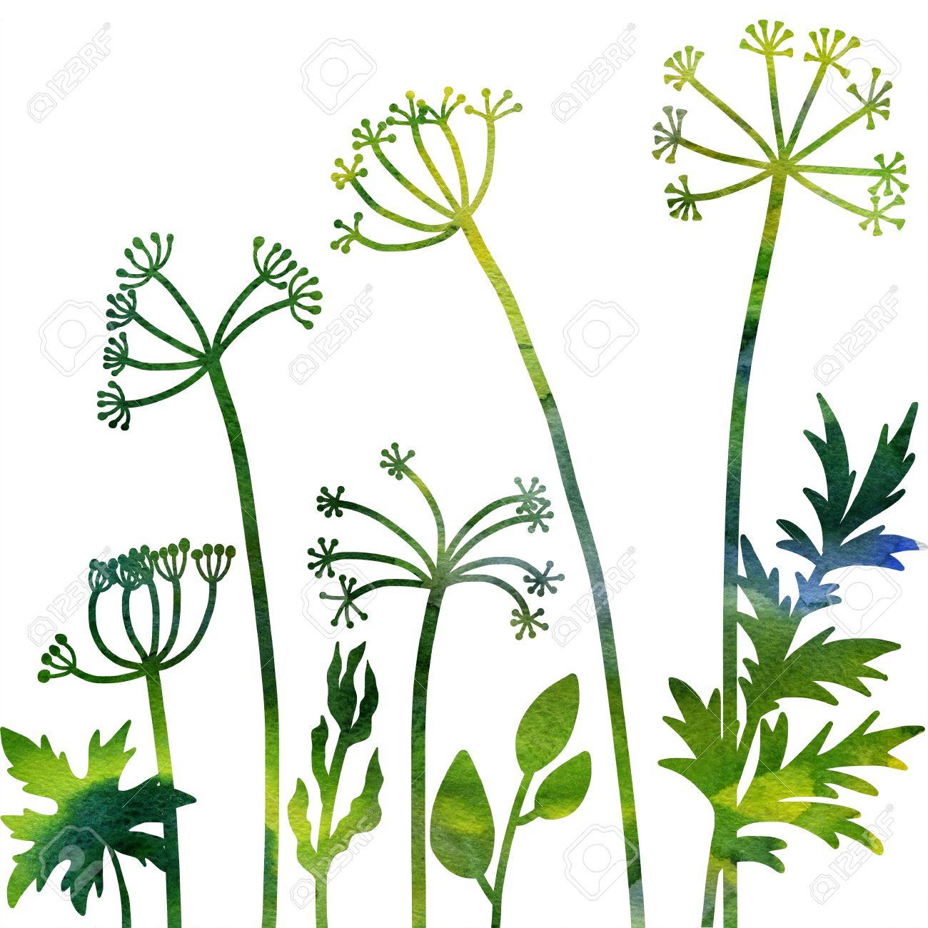 Plantes Aneth Composition Florale Avec Des Plantes Sauvages Dessin à L Aquarelle Dessin Floral Card Aquarelle Nature Artistique Fond Illustration