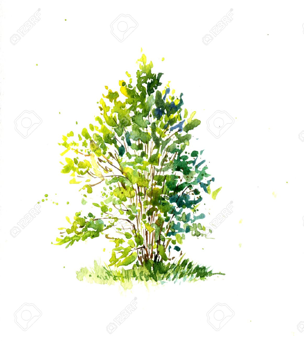 Green Bush, Lit By The Sun Drawing By Watercolor, Aquarelle Sketch ... for Tree Drawing With Watercolor  131fsj