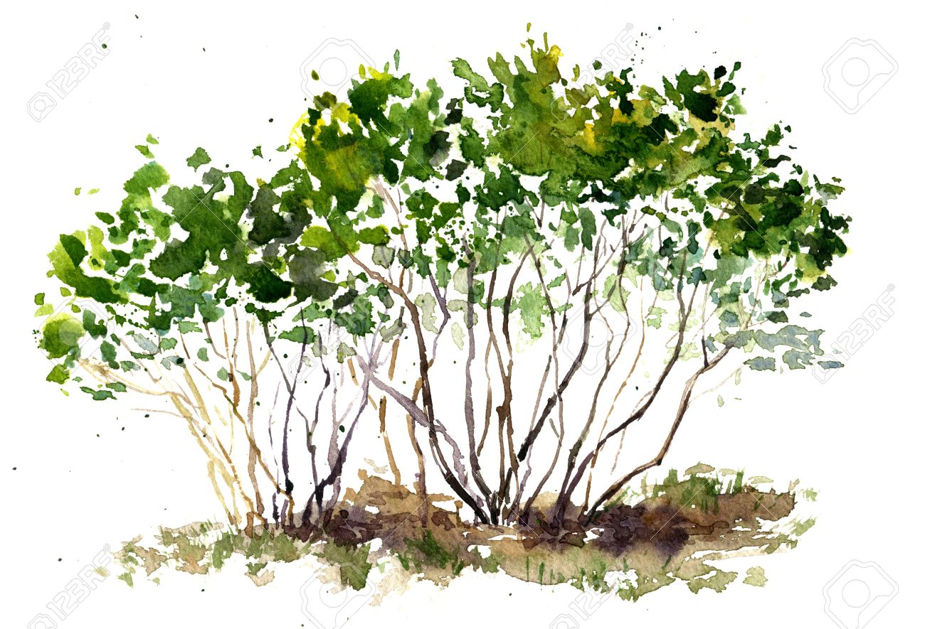Green Bushes Drawing By Watercolor, Aquarelle Sketch Of Spring ...