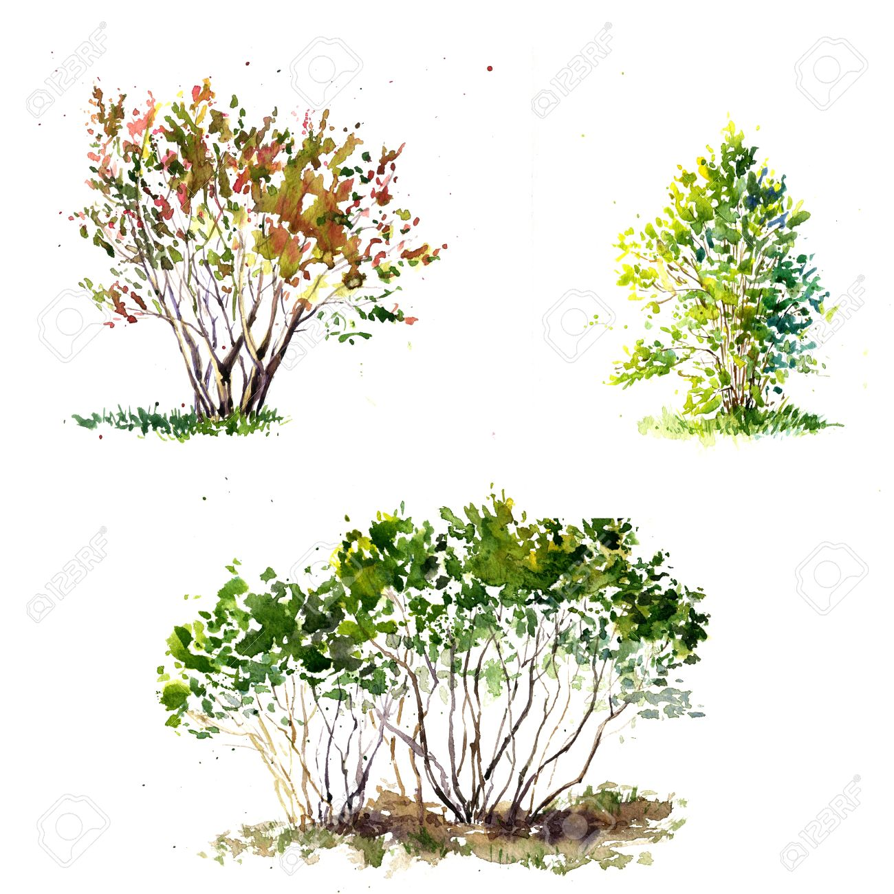 Set Of Green Bushes Drawing By Watercolor, Aquarelle Sketch Of ... for Tree Drawing With Watercolor  539wja