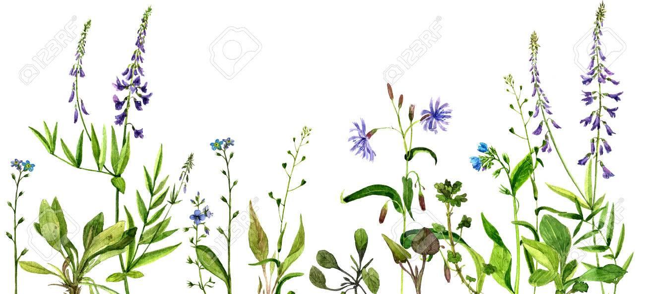 Arrière,plan avec aquarelle dessin fleurs sauvages, plantes de champ  peintes, bordure à