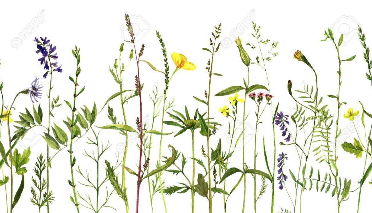 Dessin De Fleurs Et D Herbes Sauvages Frontière à Base De Plantes Décoratives Sans Soudure Le Motif Avec Des Plantes Sauvages Peintes