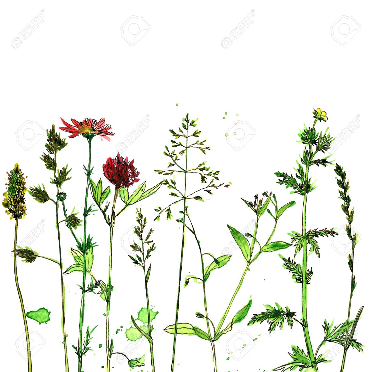 Banque d\u0027images , Fond avec aquarelle et dessin à l\u0027encre fleurs sauvages  et herbes, plantes de champ peintes, composition florale de couleur,