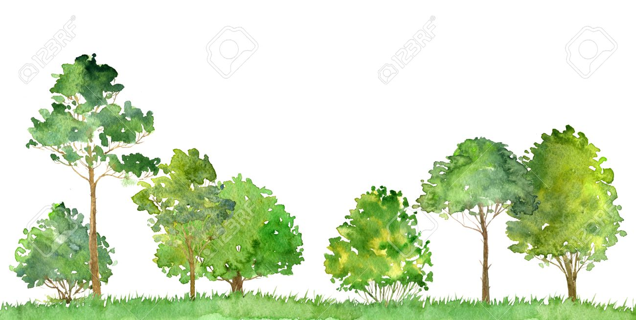Watercolor Landscape With Deciduous Trees,pine, Bushes And Grass ...