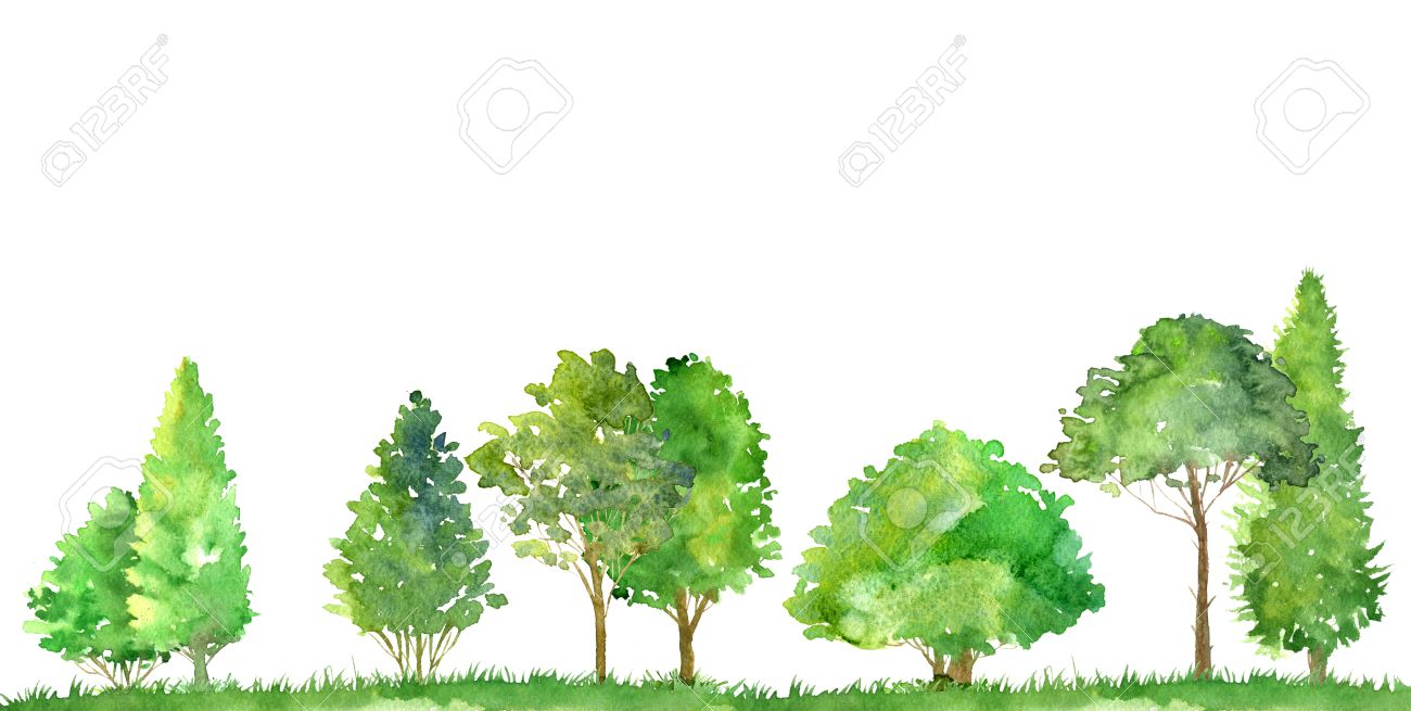 Watercolor Landscape With Deciduous Trees,pine And Firs, Bushes ...