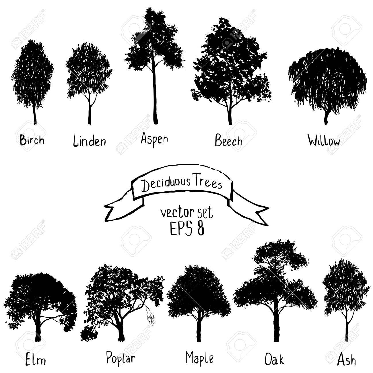 vector set of deciduous trees - 69885650