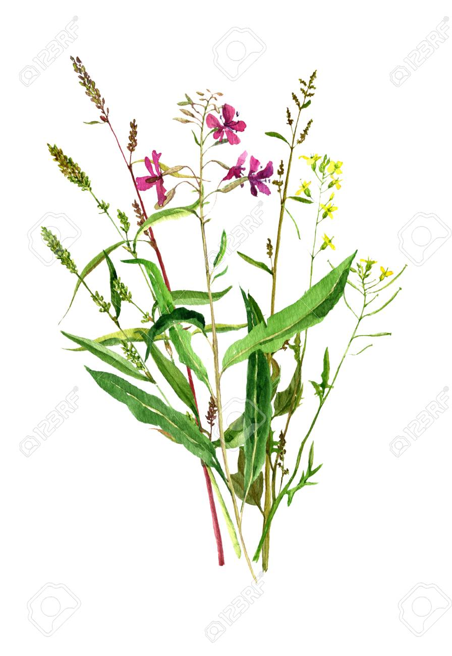 Watercolor drawing bouquet of wild flowers painted field plants illustration watercolor drawing bouquet of wild flowers painted field plants botanical illustration in vintage style color floral composition izmirmasajfo