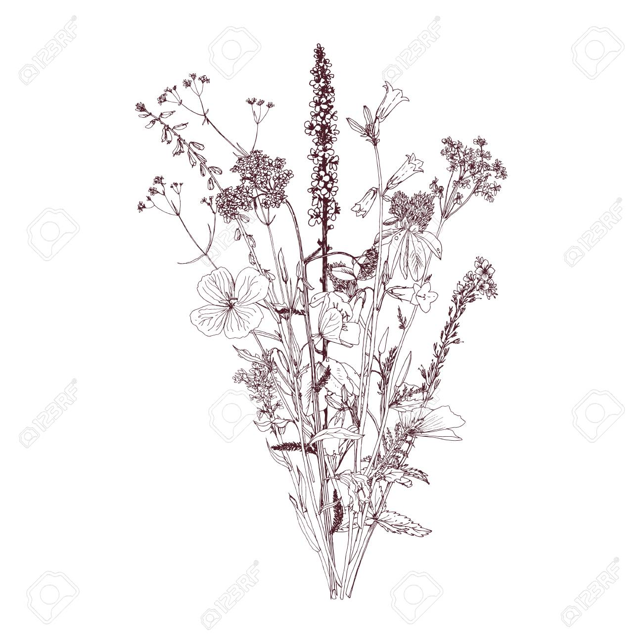 Vector Bouquet With Drawing Wild Plants Herbs And Flowers Monochrome Royalty Free Cliparts Vectors And Stock Illustration Image 87116097