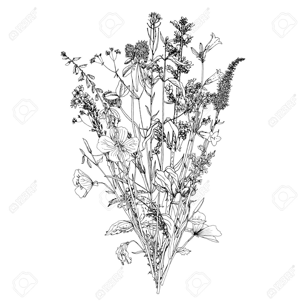 Vector vector bouquet with drawing wild plants herbs and flowers monochrome botanical illustration in vintage style isolated floral element
