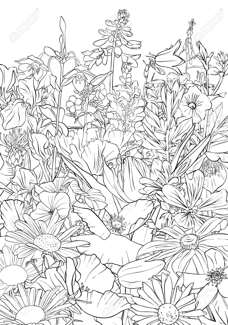 Vector Drawing Background With Flowers Stock Photo Picture And