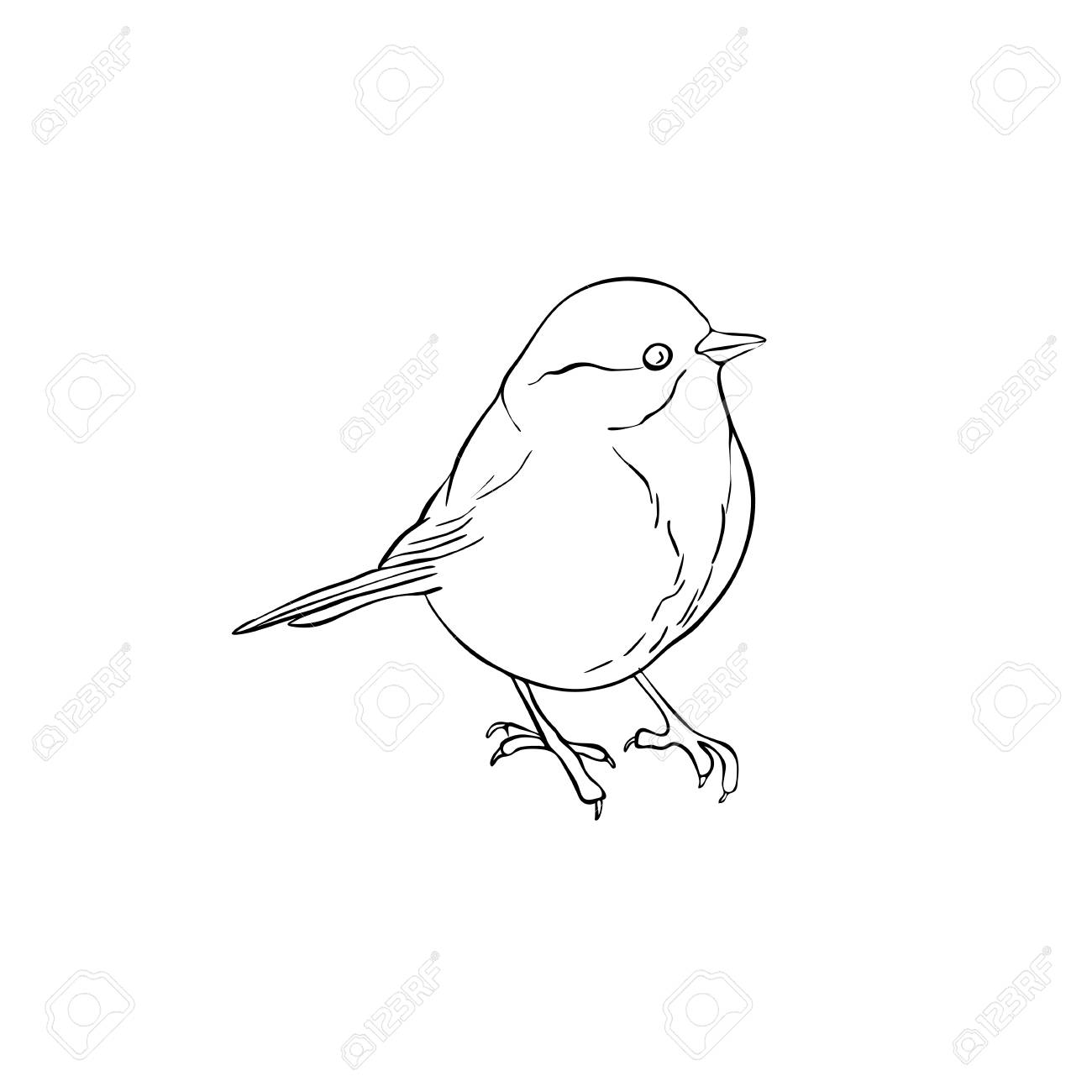 Vector Line Drawing Bird Sitting At Tree Branch Sketch Of Titmouse