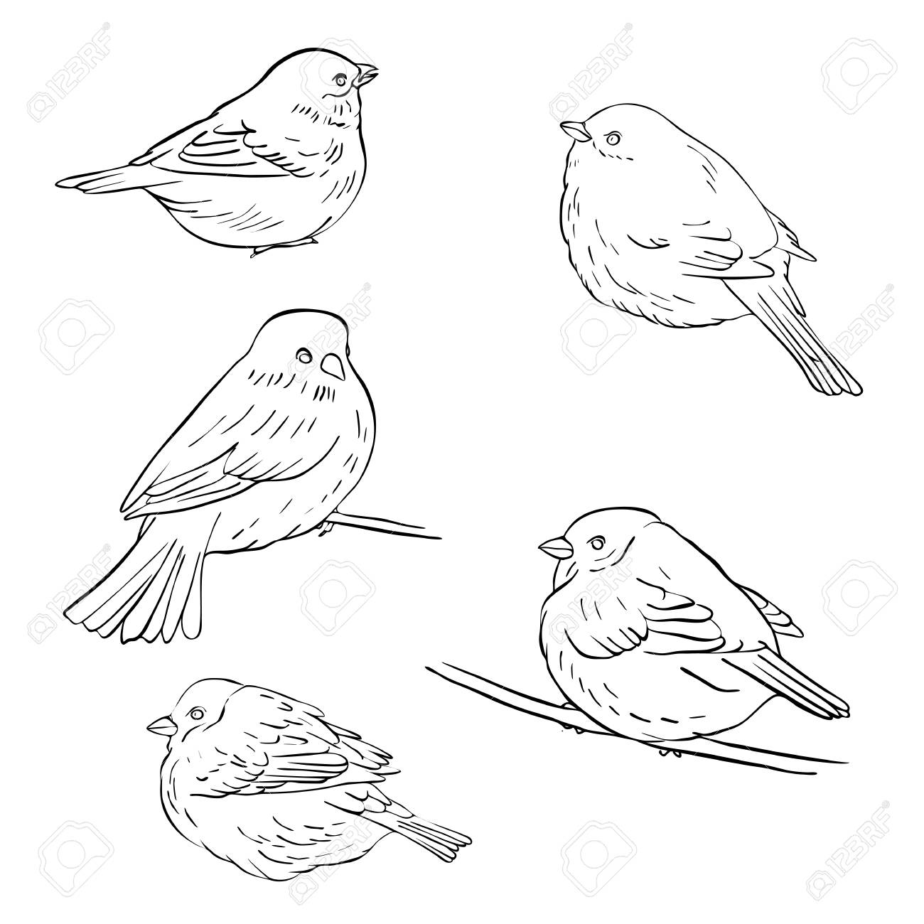 Vector Line Drawing Bird Sitting At Tree Branch Sketch Of Sparrow