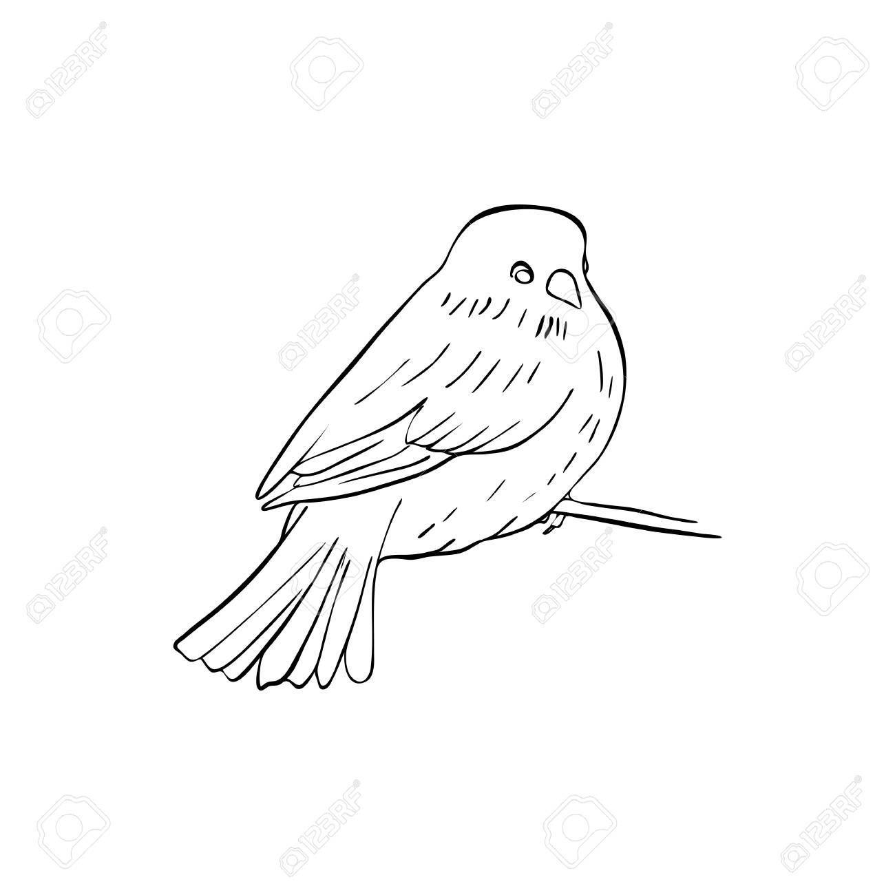 Vector Line Drawing Bird Sitting At Tree Branch Sketch Of Sparrow Royalty Free Cliparts Vectors And Stock Illustration Image 124674925