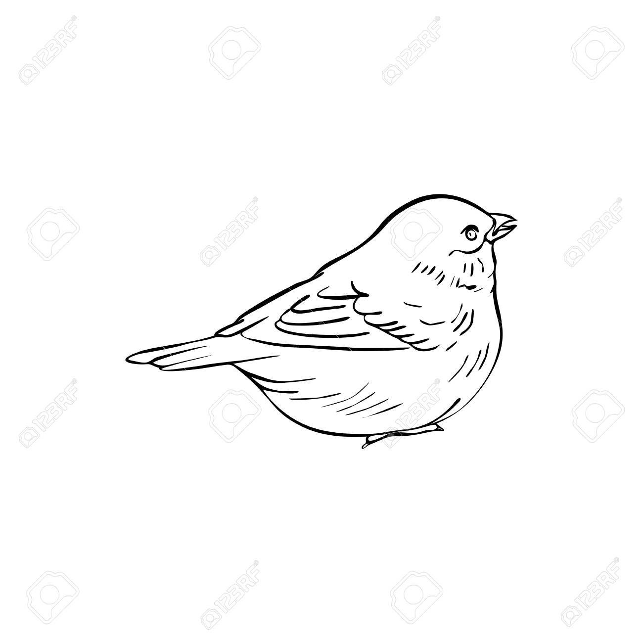 Vector Line Drawing Bird Sitting At Tree Branch Sketch Of Sparrow Royalty Free Cliparts Vectors And Stock Illustration Image 124674926