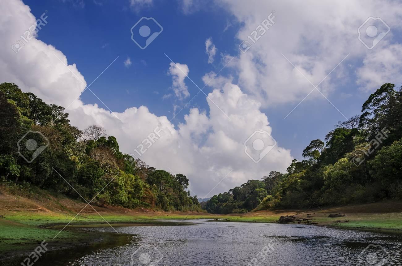Morning landscape in National park Periyar Wildlife Sancturary, Kumily, Kerala, India - 40048380