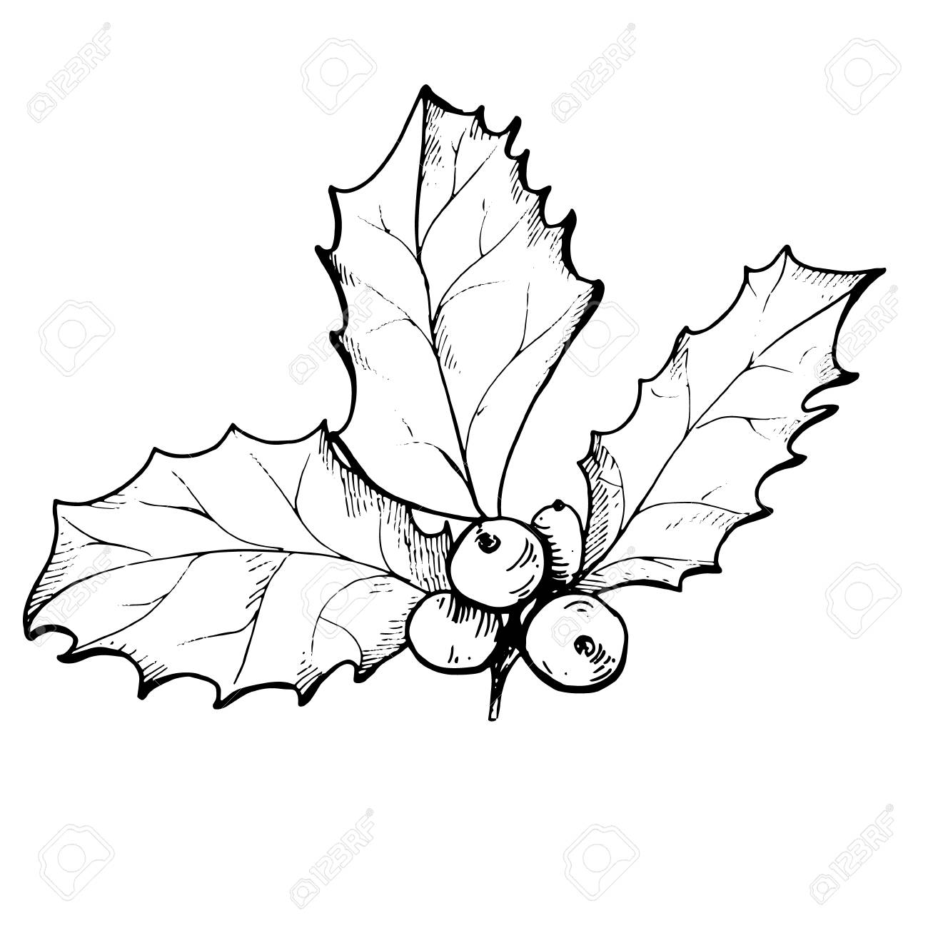 Vector linear drawing of Christmas holly berry isolated - 90165757