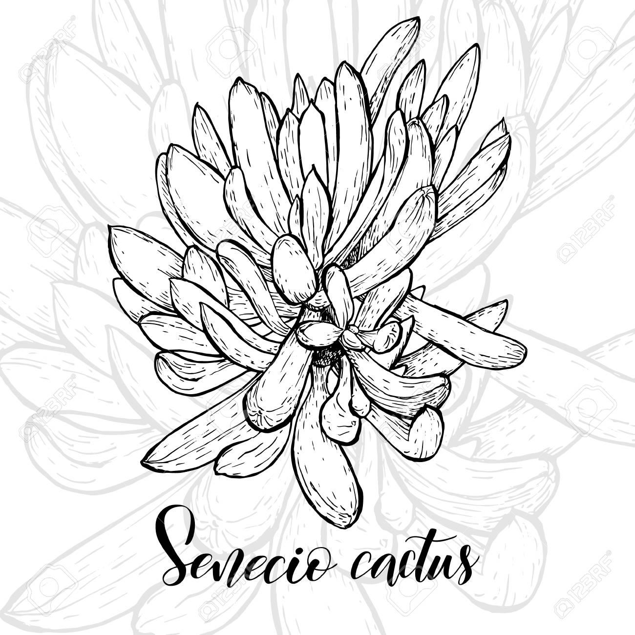 Hand drawn senecio icon. - 96085079