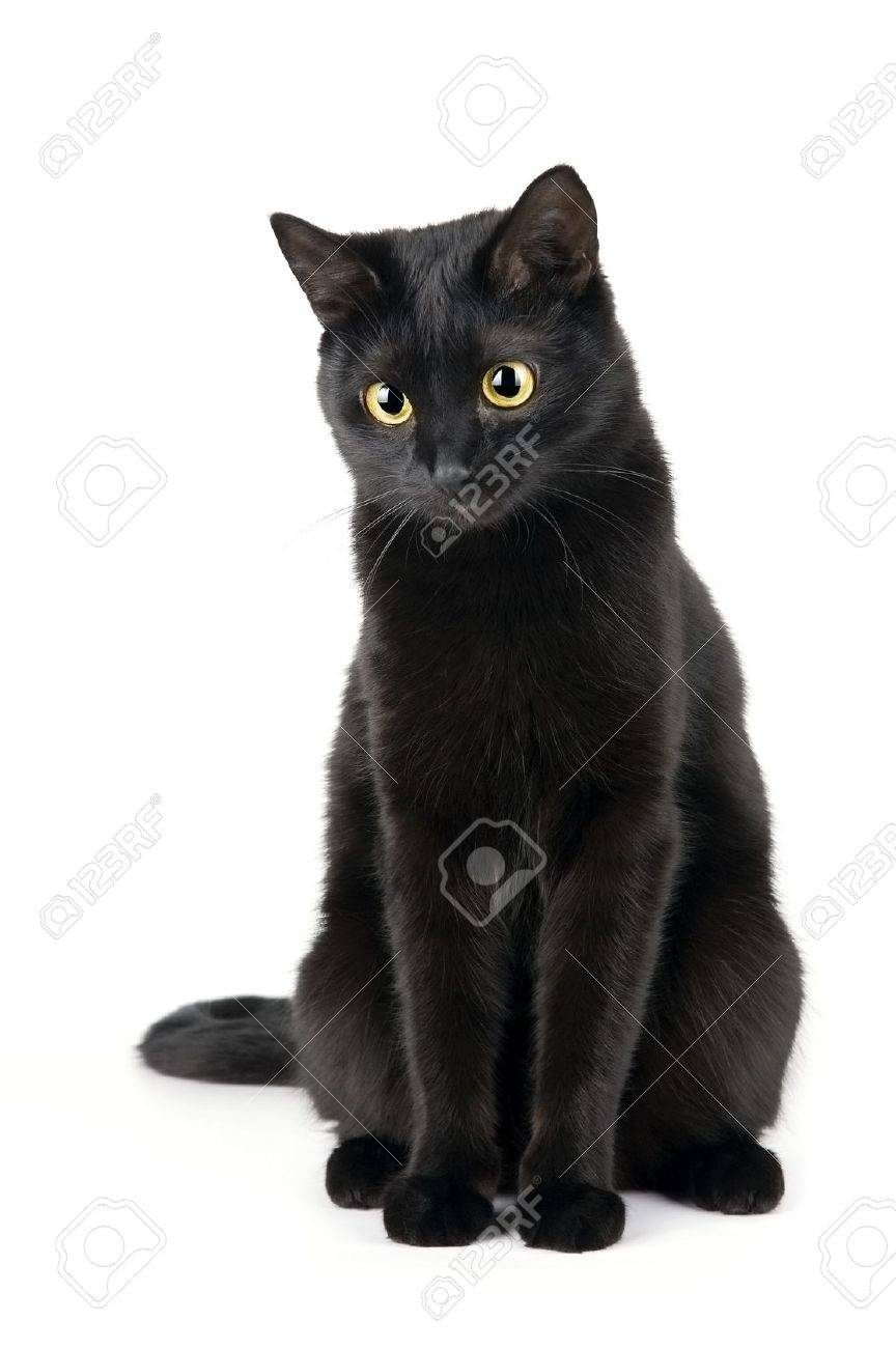 Cute Black Cat Isolated On White Stock Photo Picture And Royalty