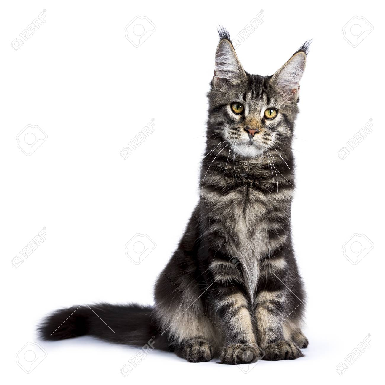 Picture of a cat sitting up
