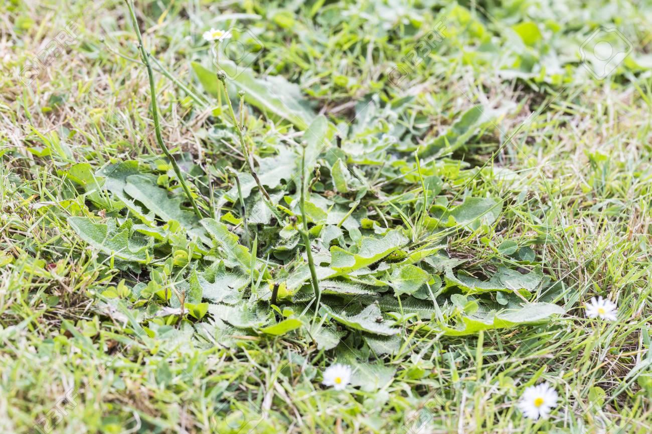 芝生 害虫