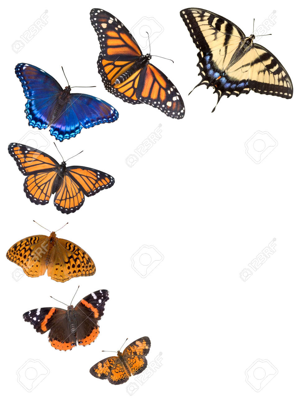Seven Different Kinds Of Butterflies Are Arranged On A White Stock Photo Picture And Royalty Free Image Image 2320428