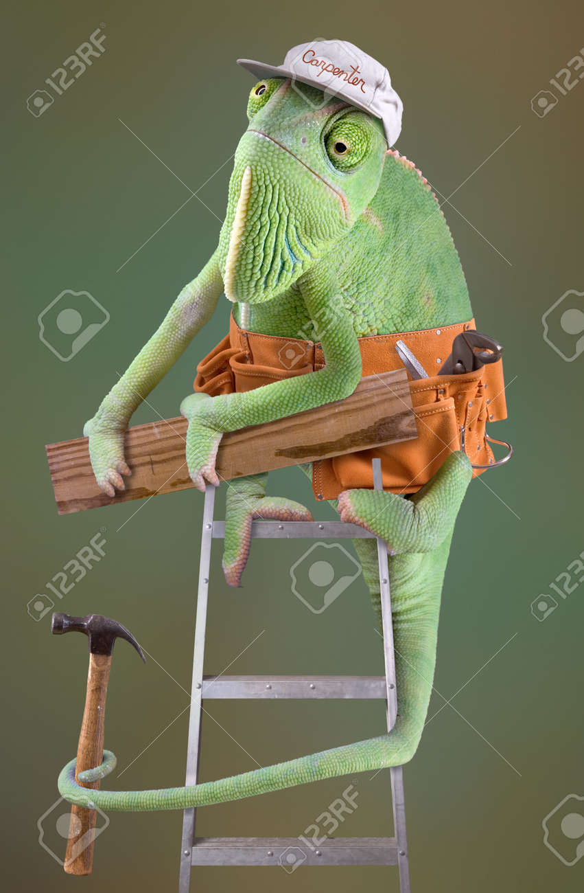 A chameleon is dressed as a carpenter on a ladder. Stock Photo - 2893926