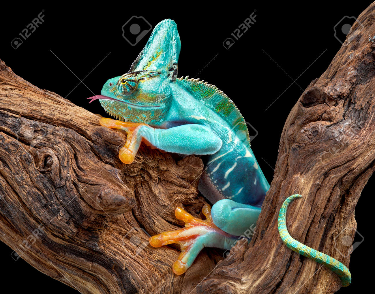 A creature appears to be part frog and part chameleon. Stock Photo - 12323876