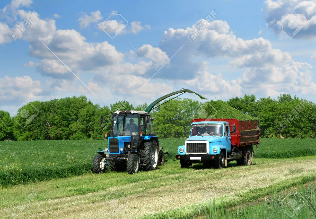 Harvester crop the green grass and load in to cargo Stock Photo - 948777