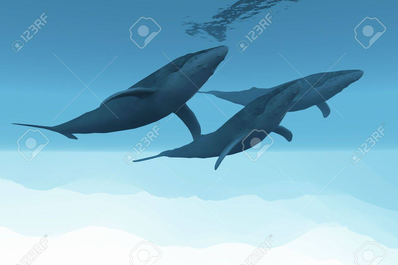 Three Humpback whales swim together in the vast open ocean. Stock Photo - 5260316