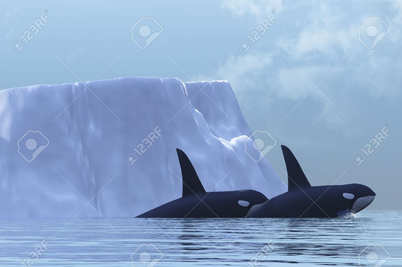 Two Killer Whales swim near an iceberg in the Arctic Ocean. Stock Photo - 5347917