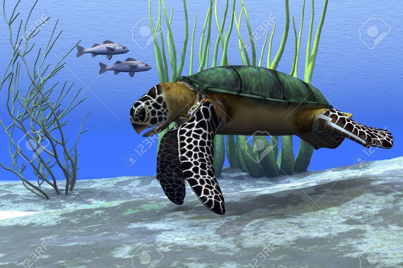Sea Turtle Shell Sea Turtle a Sea Turtle