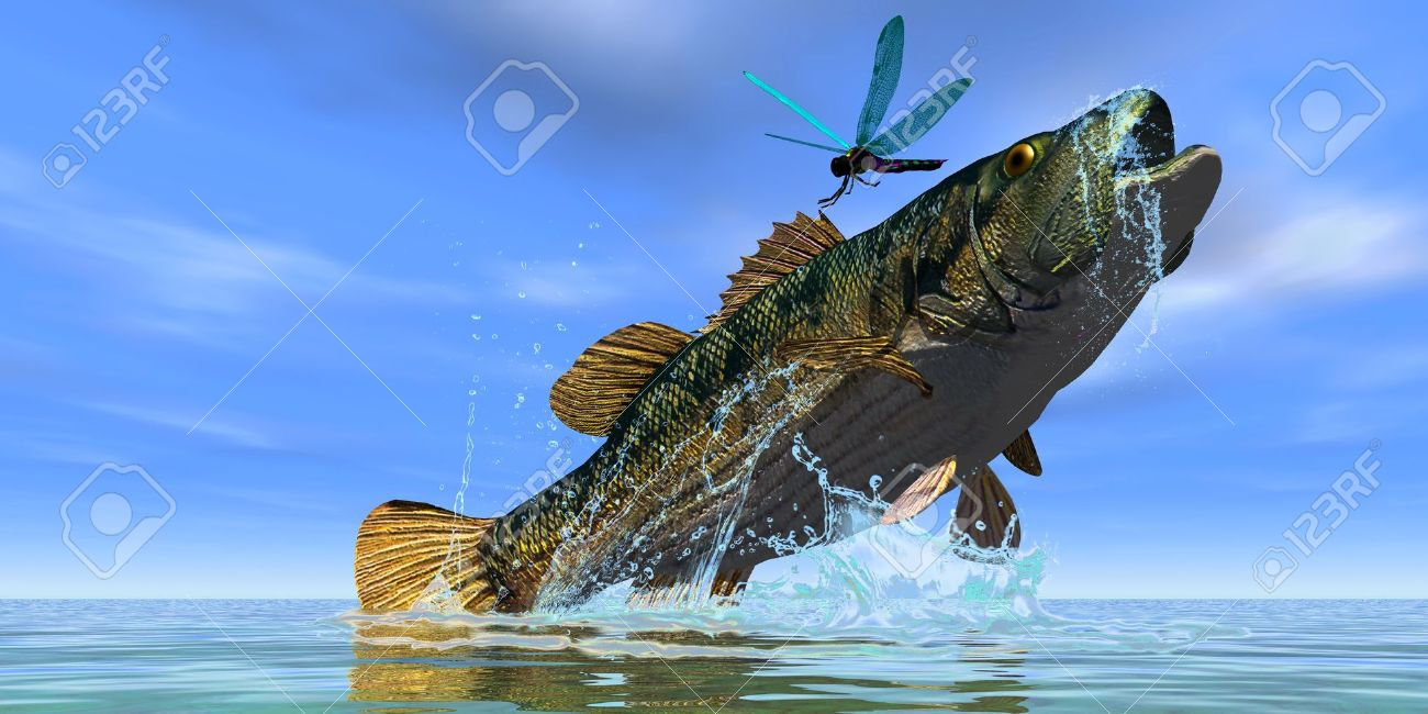 Freshwater fish jumping - Freshwater Game Fish Red Eye Bass A Beautiful Red Eye Bass Jumps But Just
