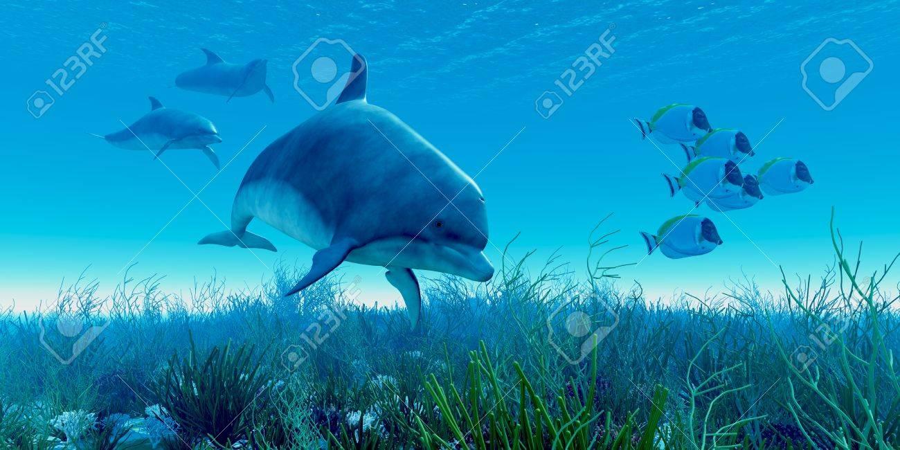 dolphin pod a of blue tango fish beat a hasty retreat