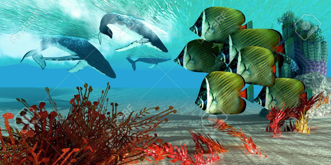 Diving Whales - A school of Redtail Butterfly fish watch as a herd of Humpback whales dive from the ocean surface Stock Photo - 15532071