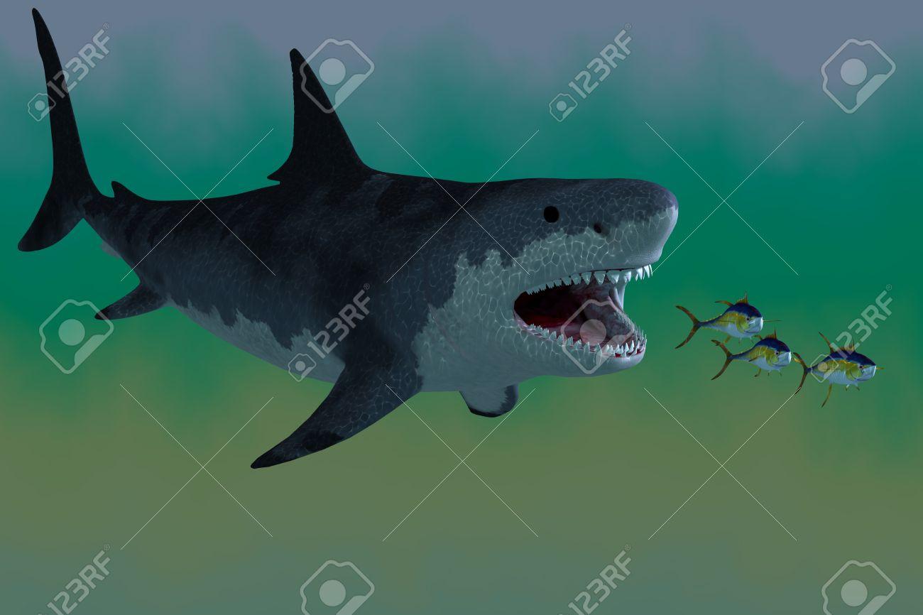 мегалодон рыба фото
