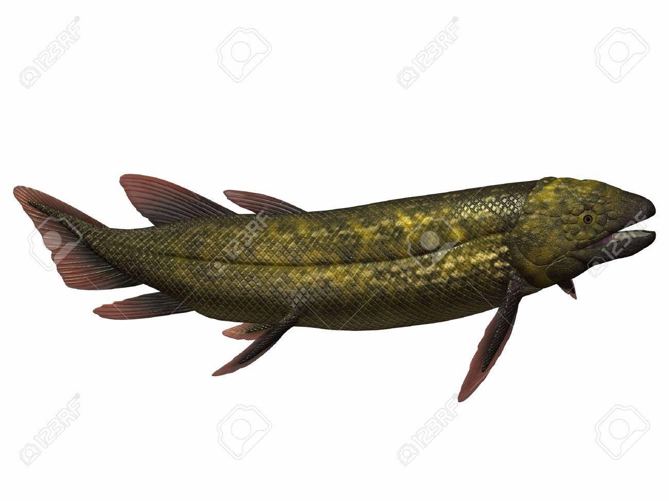 Freshwater fish in australia - Dipterus Fish On White Dipterus Is An Extinct Genus Of Freshwater Lungfish From The Devonian