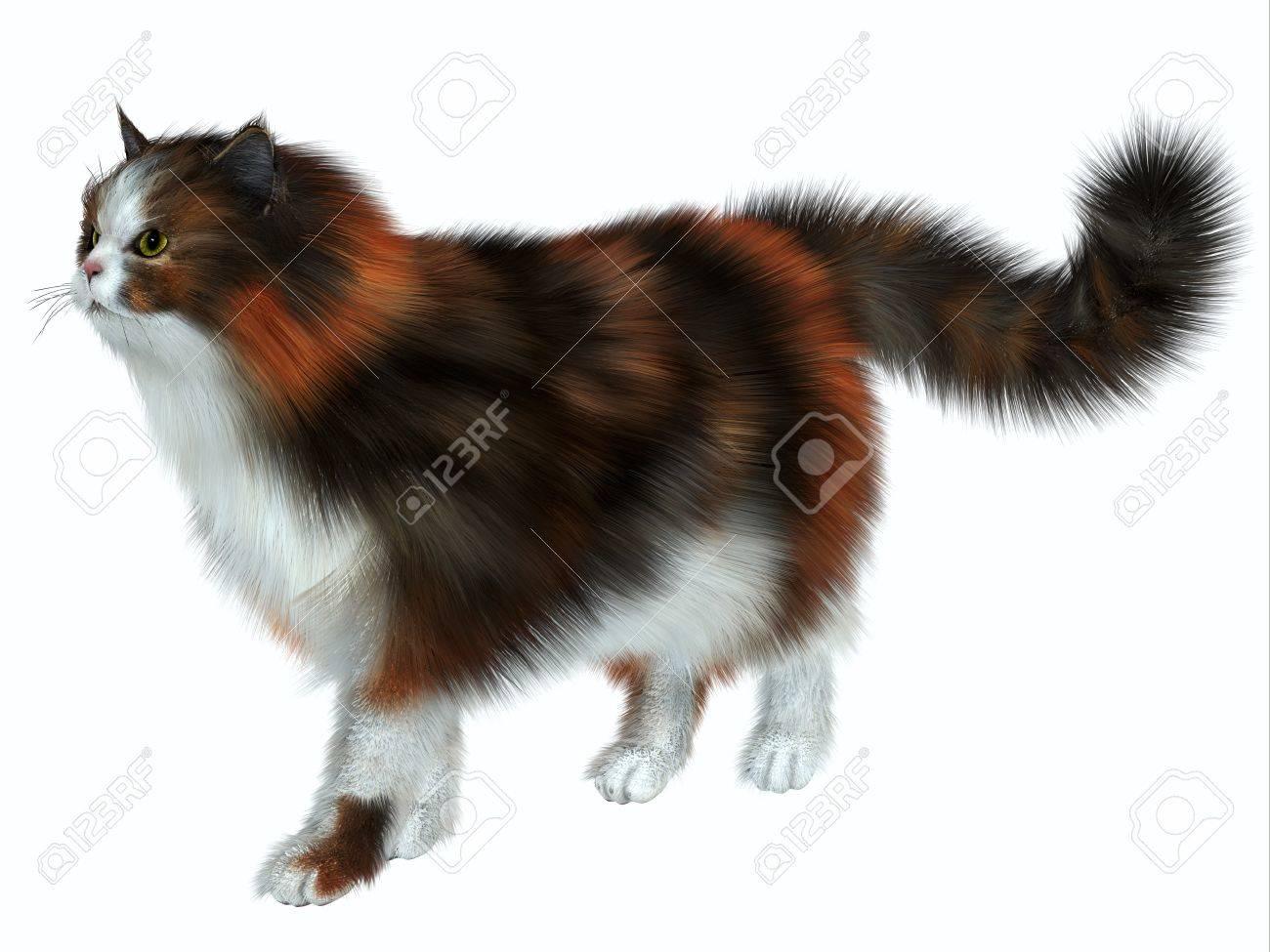 Calico Deux Une Blanche Avec Domestique Couleur Prédominance Cat Variation De Robe Le Chat La Couleurs A Autres T1lKFcJ