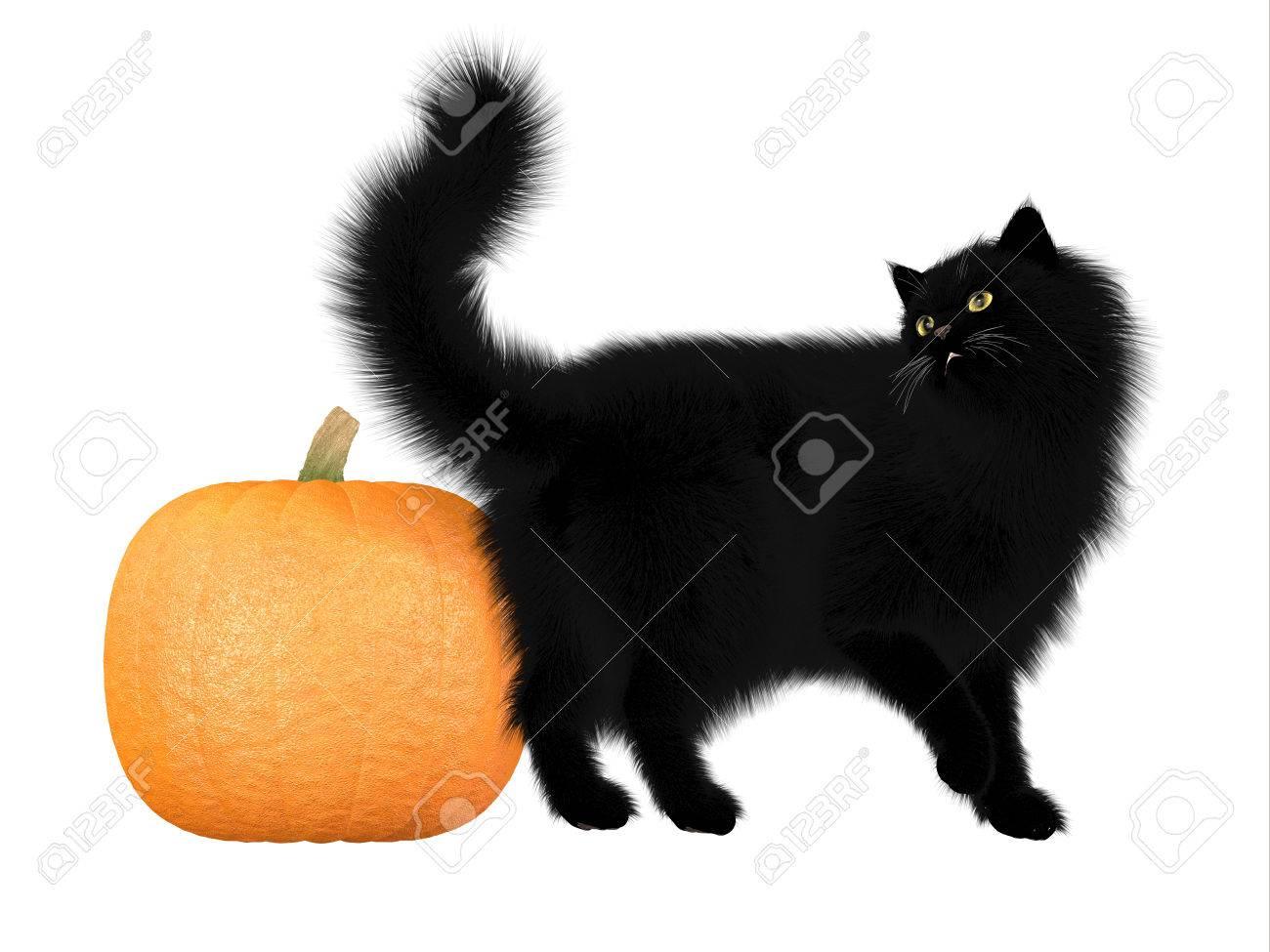Halloween Black Cat and Pumpkin - The black cat and pumpkins are a symbol of autumn seasonal Halloween festivities Stock Photo - 23905261