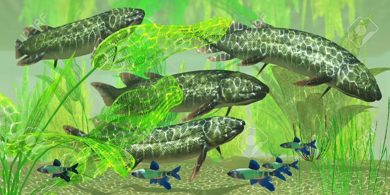 Freshwater fish in australia - Dipterus Macrolepidotus Fish Dipterus Is An Extinct Freshwater Lungfish From The Devonian Period Of Australia