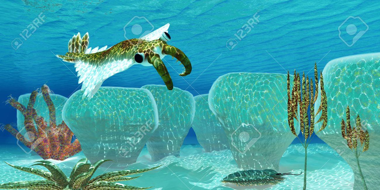 生物 カンブリア 紀