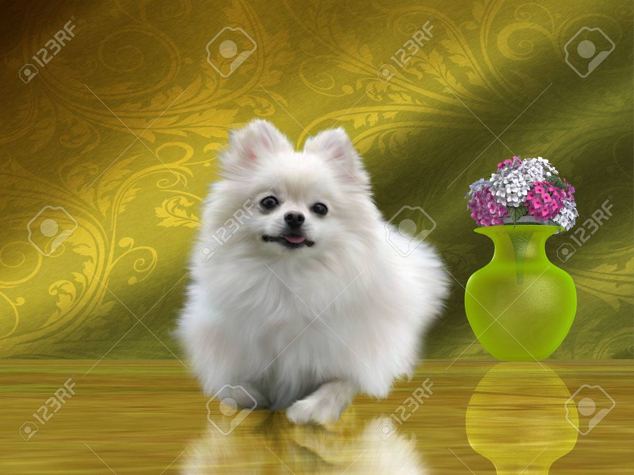 The Pomeranian Is A Small Toy Breed Of Dog That Was Started In