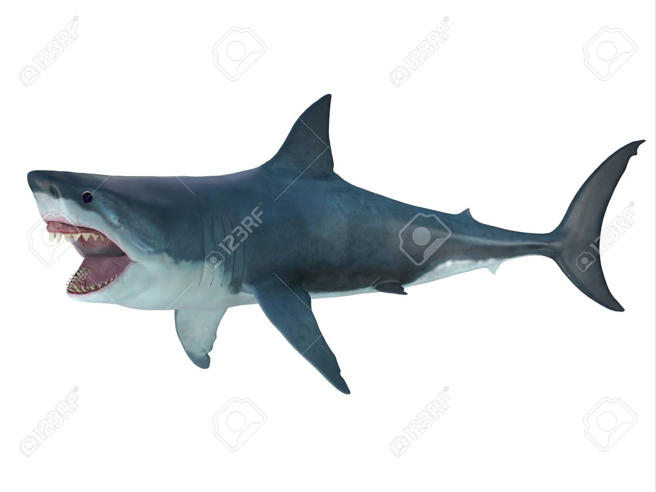 Megalodon shark attack posture the prehistoric megalodon shark megalodon shark attack posture the prehistoric megalodon shark could grow to be 82 feet in altavistaventures Image collections